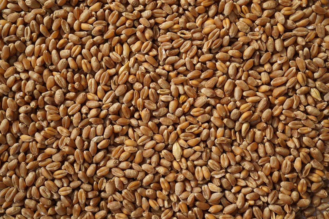 Cereal Grains in My Pantry